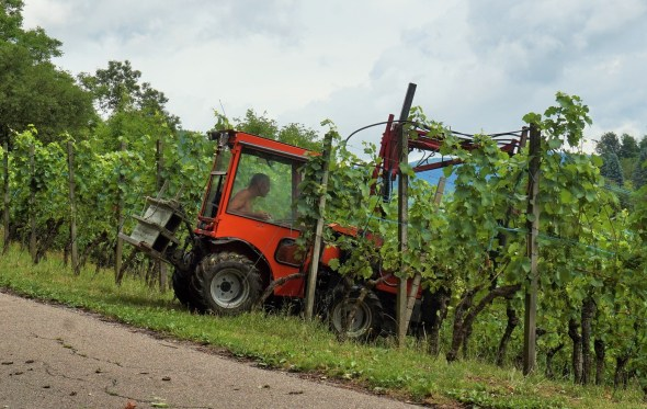 Vineyard worker in the vineyards above Gengenbach