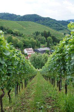 Gengenbach vineyards