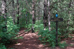 Hiking local trails