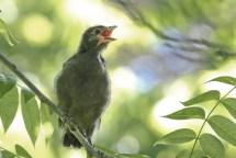 2M7A2134a6 baby bird