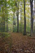 Backuswoods_CFuss_Nov2015_2