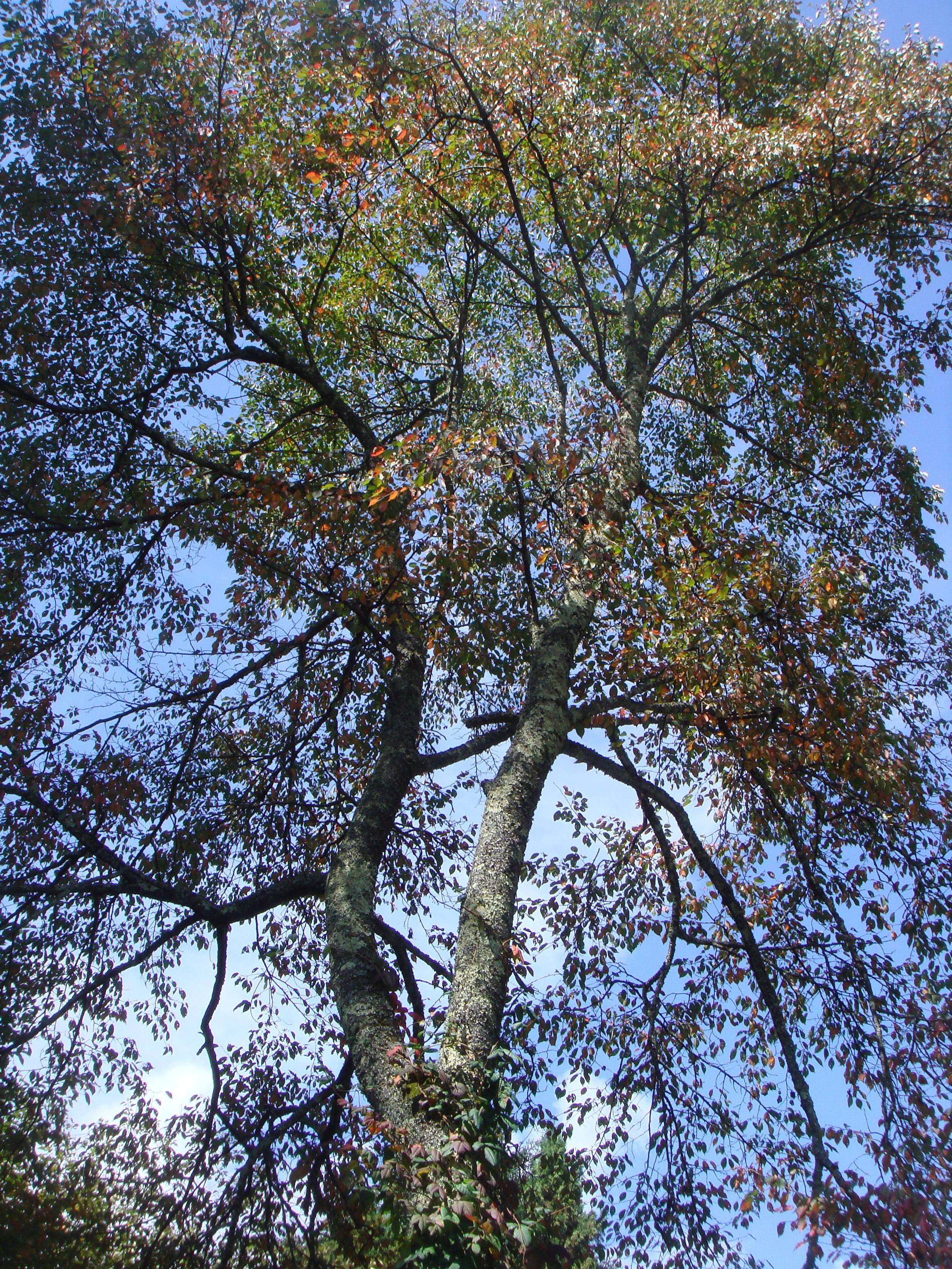 è ormai autunno