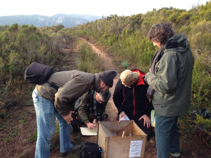 IMG_7498 trapping Montes Palancar - 12-01-18