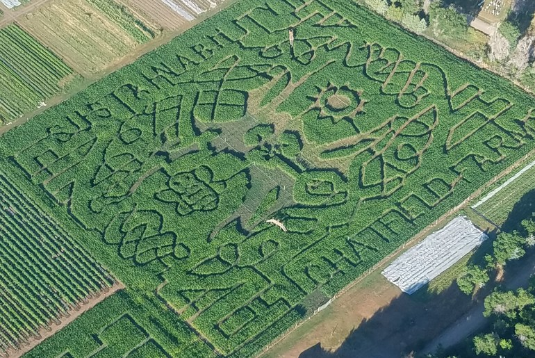 How Do They Do That The Corn Maze At Chatfield Farms