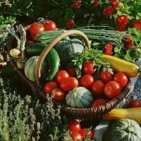 Rotatia culturilor in Agricultura Ecologica