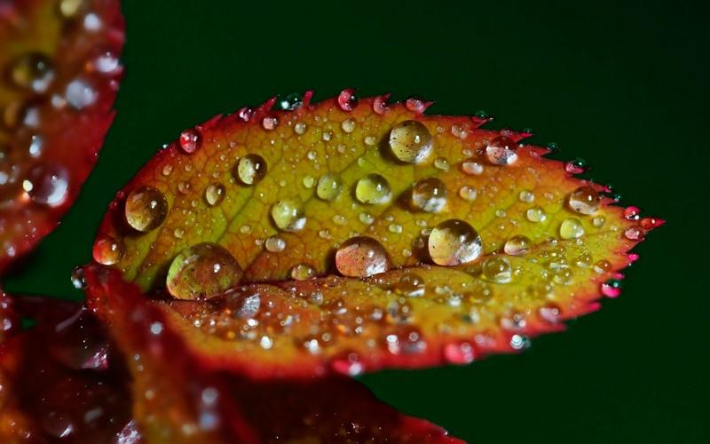 Image result for crearon una «hoja artificial» que absorbe CO₂ y produce combustible