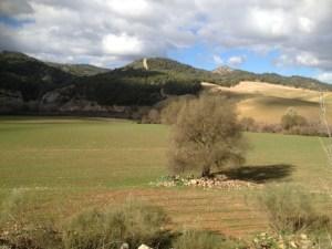 Tierras de Labor en Málaga