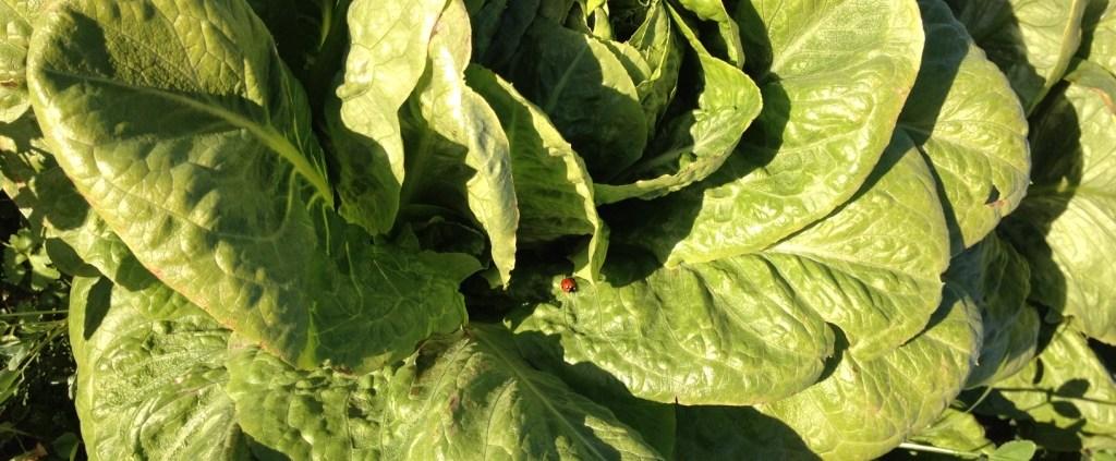 Cultivo Ecologico en Motril
