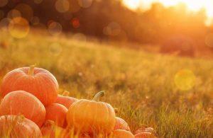 pompoen herfst groente gezondheid powerfood