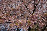 【日本廉航航點】台灣飛往日本的航線懶人包(香草、樂桃、捷星、虎航、酷航)