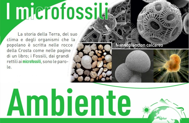 I roll-up: i microfossili