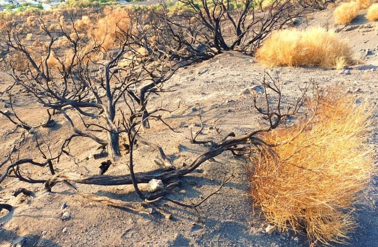 Incendi boschivi e dissesto idrogeologico