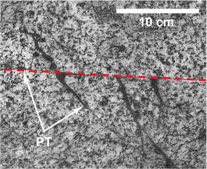 """Figura 1. Dettaglio di vene di pseudotachilite (regioni scure indicate dalle frecce) che in seguito all' evento sismico vengono """"iniettate"""" nelle rocce incassanti che circondano la faglia (evidenziata dalla linea rossa tratteggiata). Tratta da Pittarello et al. ( 2008 )"""