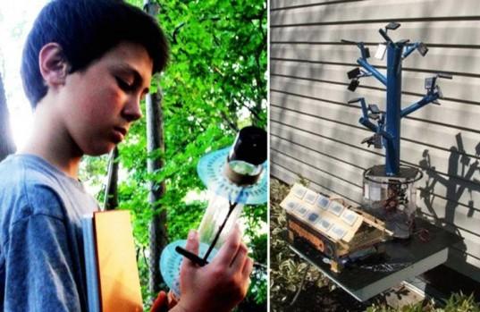 tree inspired solar, boy solar invention, Aidan Dwyer, solar array, new solar array, solar tree, solar technology, biomimicry solar, sustainable design, fibonacci sequence, solar tree