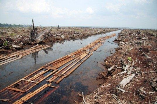 palm oil, deforestation indonesia, peat lands, peat drainage, farming environment