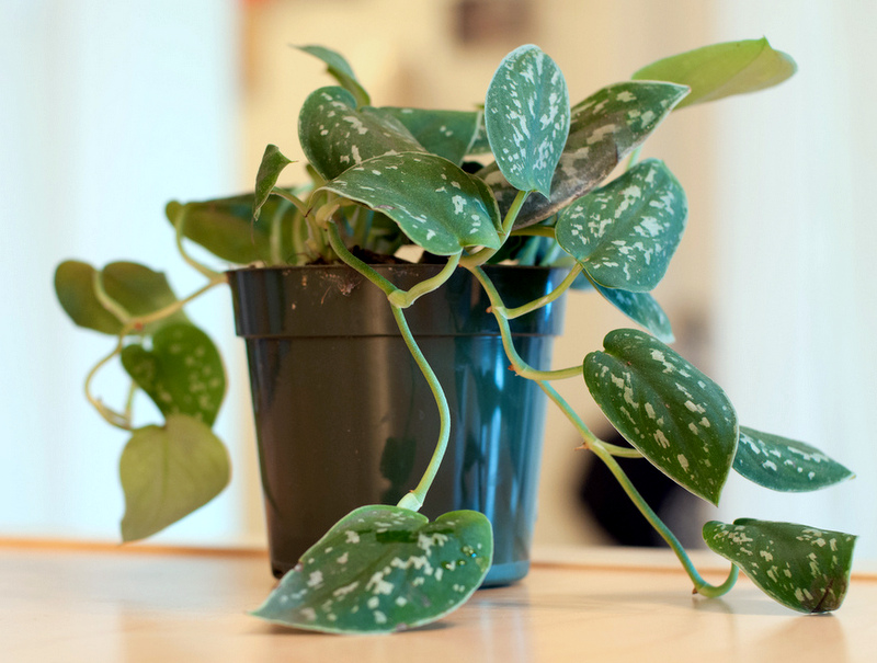 Best Low Maintenance Indoor Plants