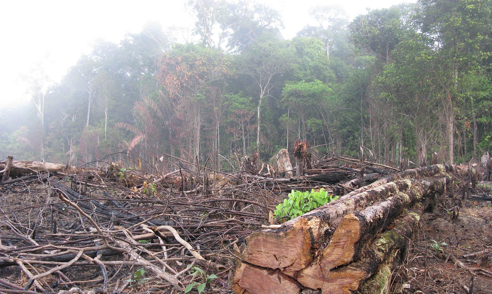 Amazon Deforestation Leaps 16 Percent In