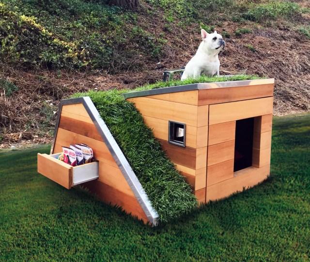 Dog Sitting On Green Roofed Dog House