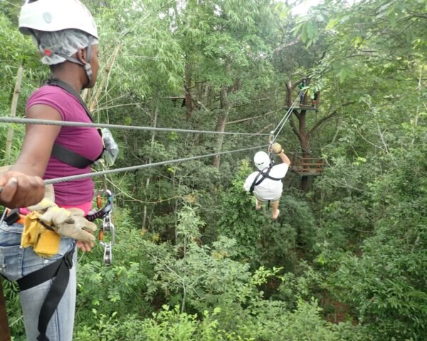 How zip lining impacts tree health, according to experts