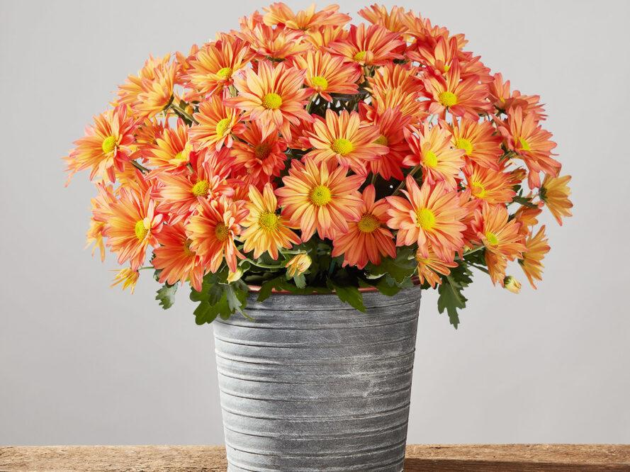 a potted plant with bright orange flowers.