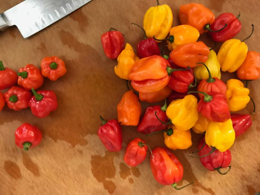 Give the habanero peppers a rough chop for the hot sauce.
