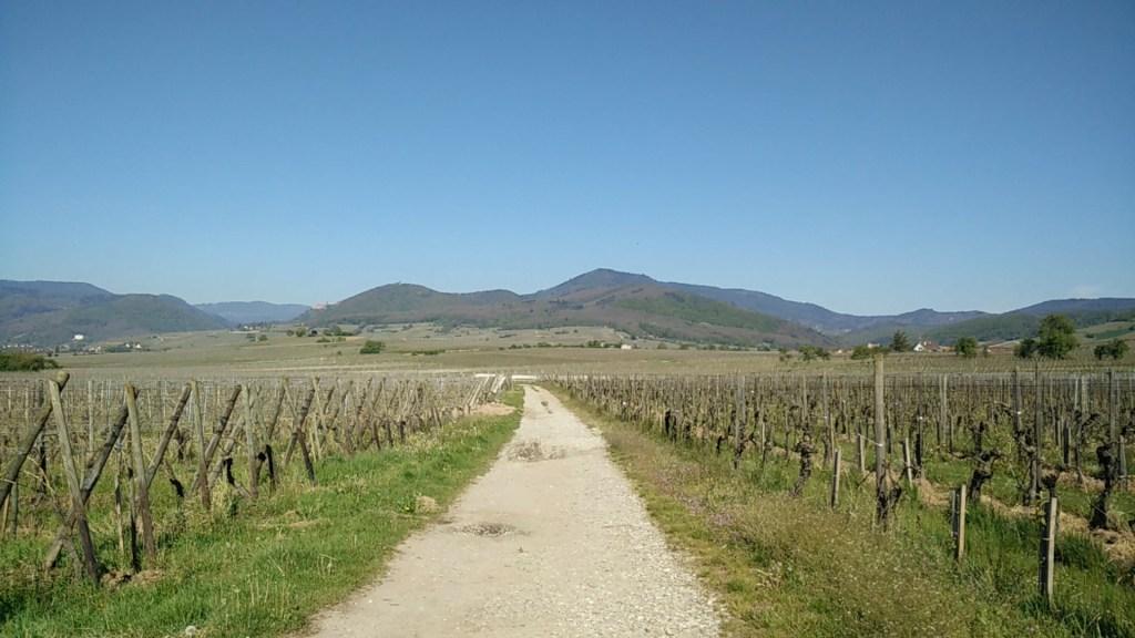 Wijnreis Elzas - uitzicht over de wijngaarden