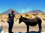 Vulcão Licancabur Chile