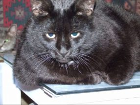 Author Page A black cat, nicknamed Nortie, who serves as Torsade's site ambassador.
