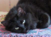 Photo of mischievous black cat