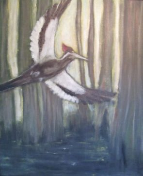 Mystery Plays ivory-billed woodpecker in cypress swamp poem the immortal lake