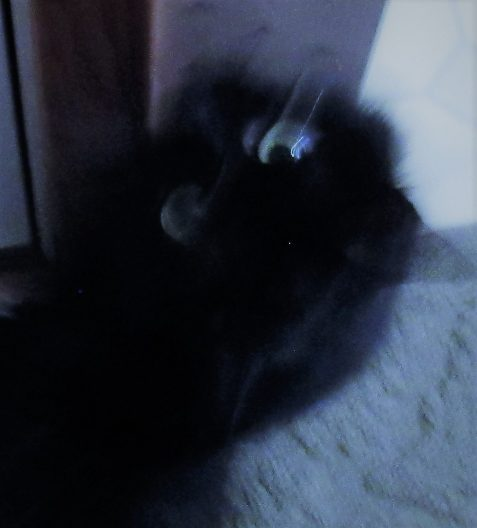 Photo of black cat blurred in motion