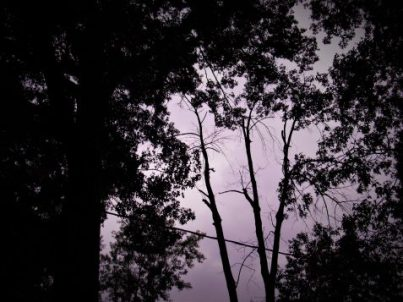 Flash Fiction grey-toned photo of sky and trees art for Pine