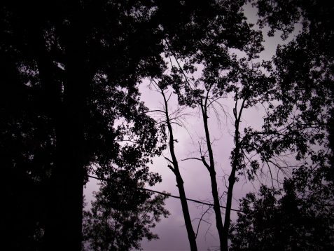 Stylized photo of pink-grey sky and crowns of trees