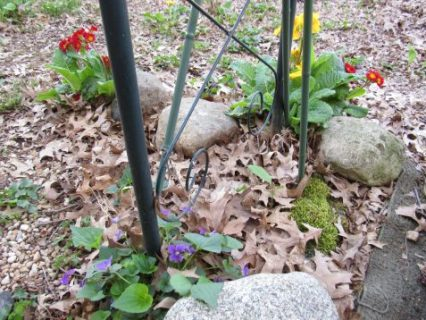 Assorted Opinions trellis with violets and primroses at base