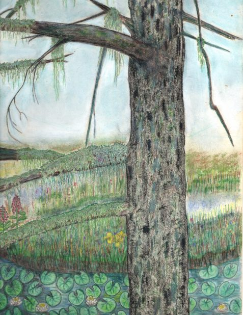 Pencil drawing of pine and marsh plants