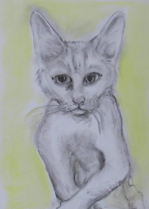 Charcoal and pastel drawing of small cat held by man's hand