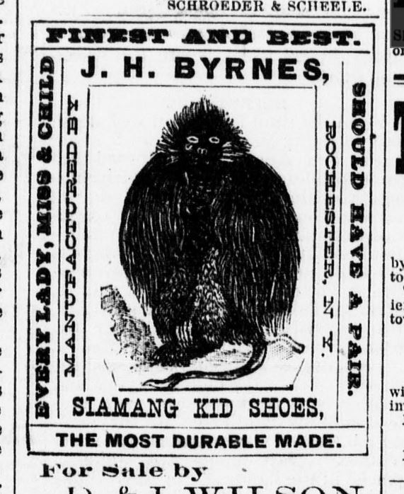 Newspaper clipping strange creature used to sell shoes