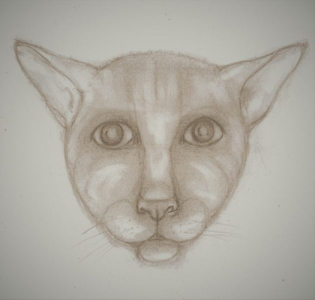 Pencil drawing of humanish cat face