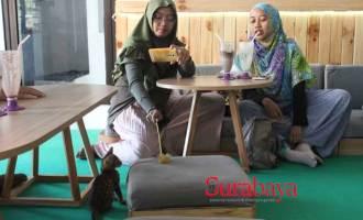 Permalink ke Setelah di Malang, Kucing-Kucing Aneka Ras Ajak Bermain Warga Surabaya di Kafe Ini