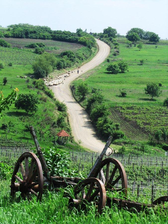 sejour-a-velo-en-roumanie-route-des-vins-bergers