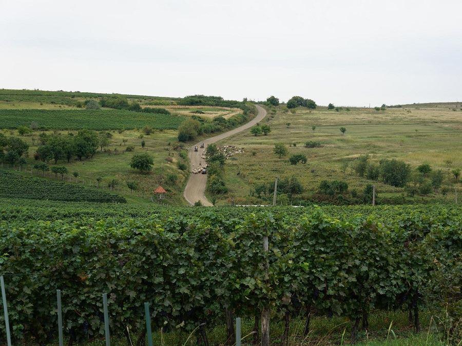 sejour-sur-mesure-a-velo-route-des-vins-en-roumanie