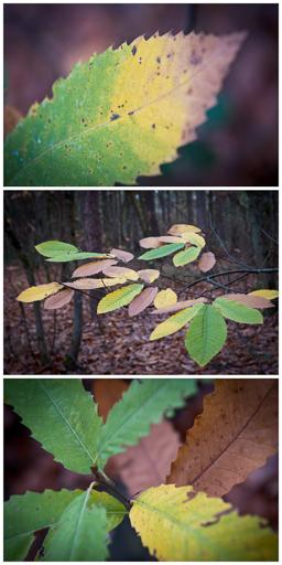 Triptyque sur les couleurs de l'automne