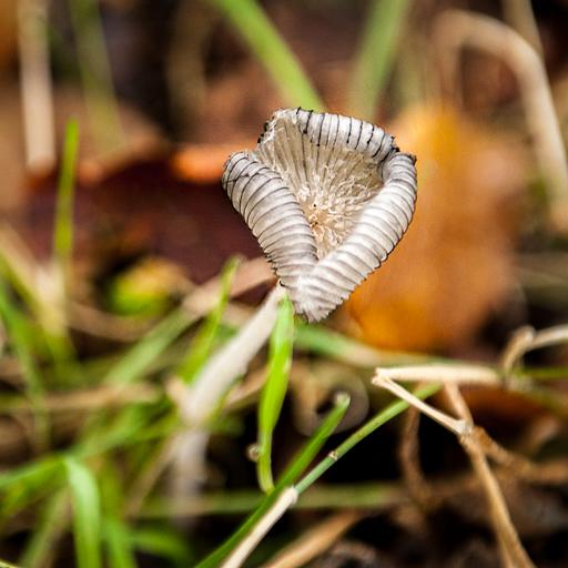 Détail d'un champignon, caractéristique de la saison d'automne