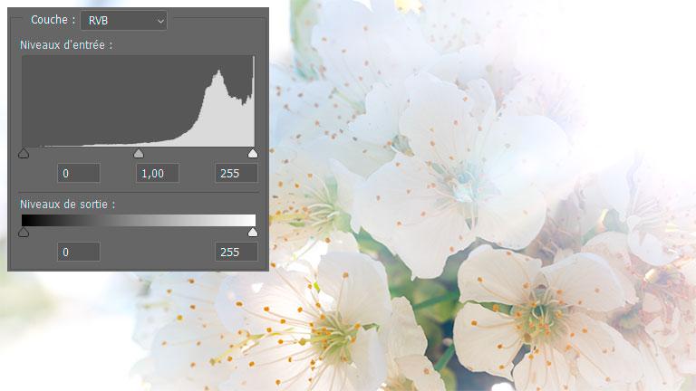 Illustration d'une photo représentant des tons clairs avec un histogramme tassé sur la droite