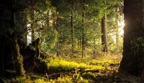 Illustration de la teinte de la lumière par l'environnement (vert des feuilles) et contre-jour mis en évidence par la translucidité de la mousse.