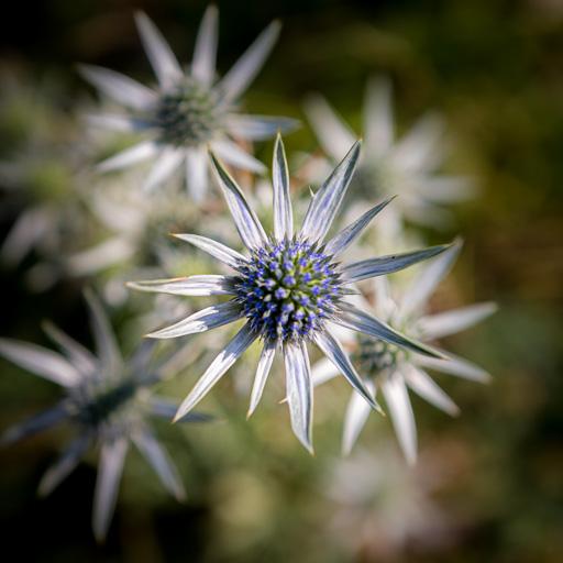 Le fait de flouter le fond de l'image attire d'attention sur la forme de de la fleur nette