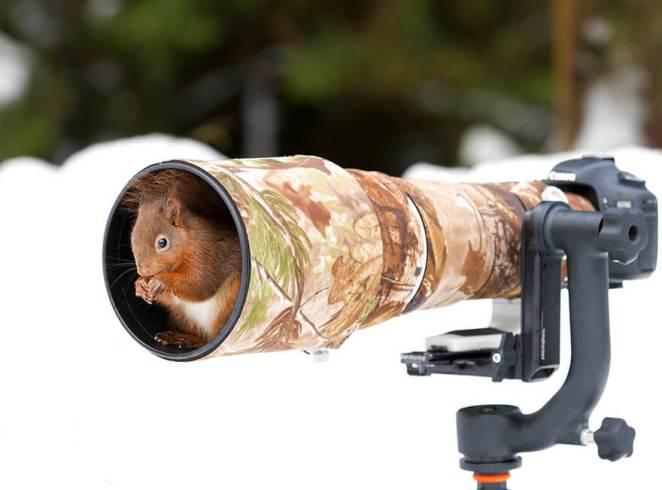 Squirrel in a camera