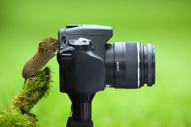 mouse taking a picture