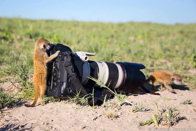 Lemurs photography