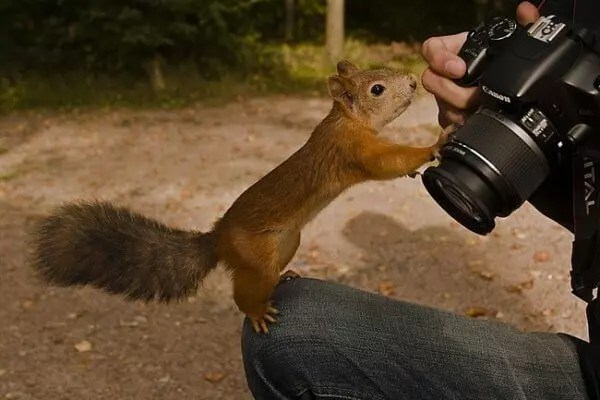 squirrel and photographer